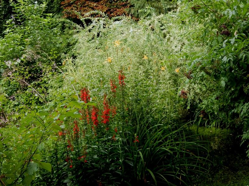 Cardinal Flower, daylilies 'altissima' and joe pye weed