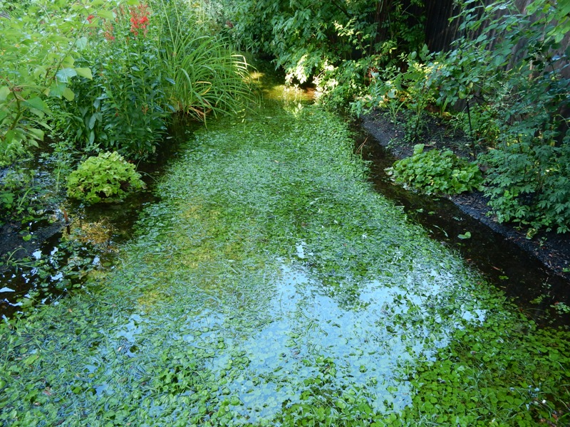 Autumn assessment - deluges of rain
