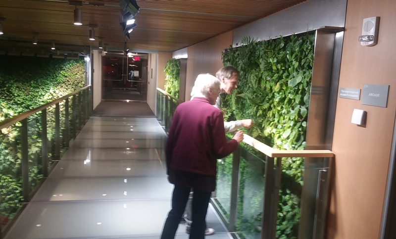 living wall plants