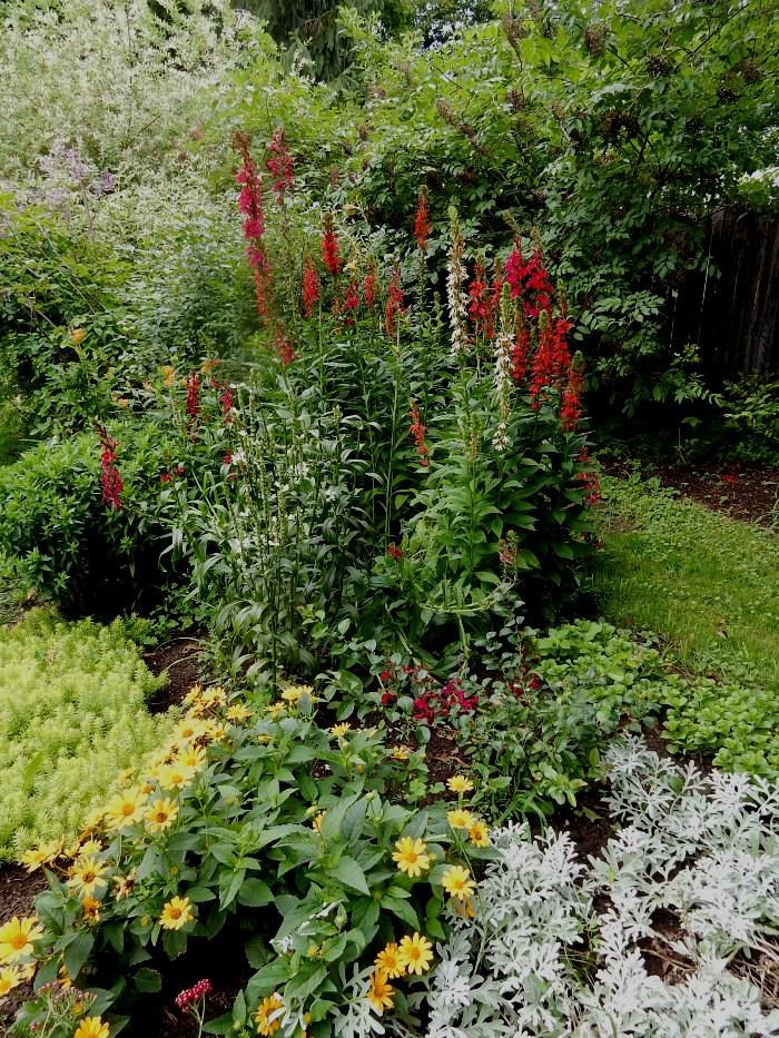 Caardinal Plant