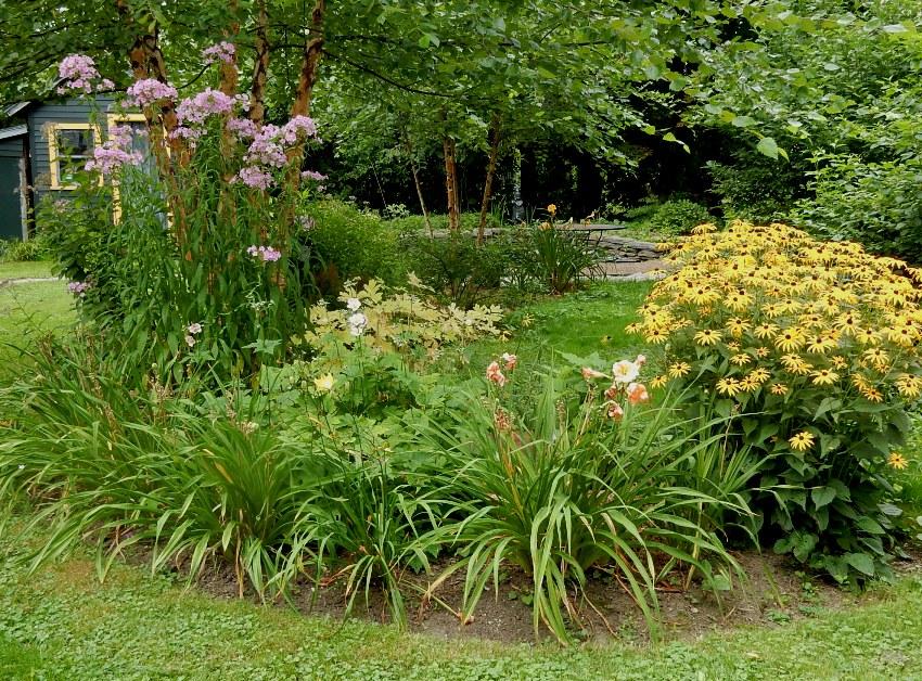 Rudbeckia, daylilies and phlox