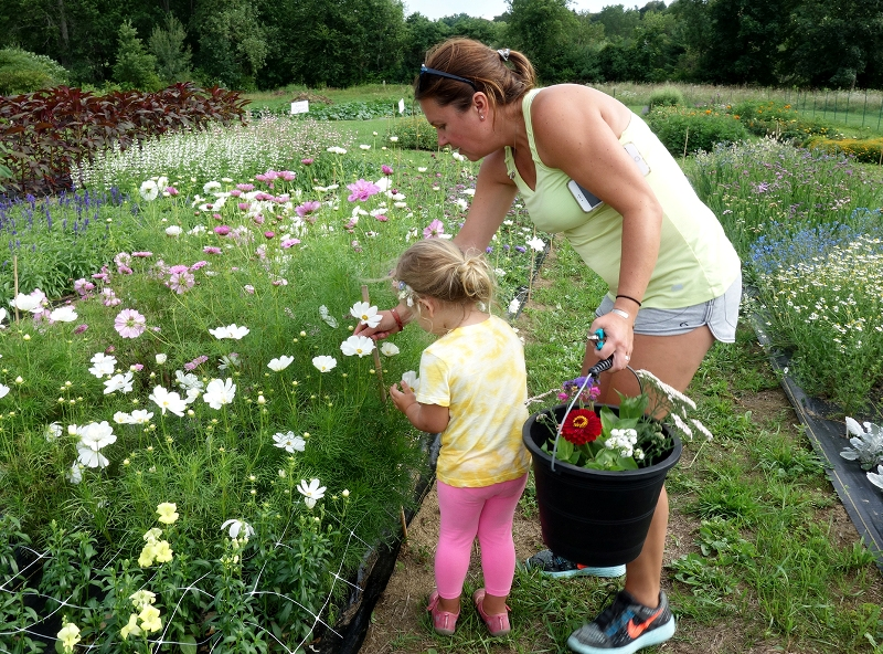 Pick Your Own Flowers at QuonQuont Farm