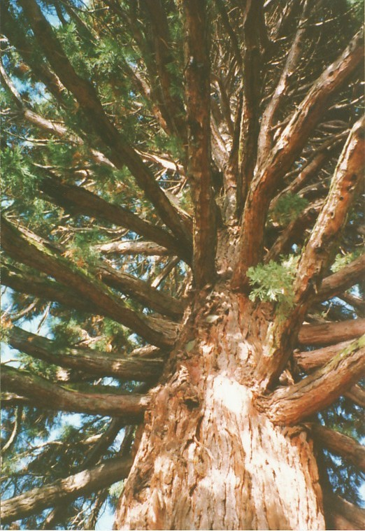 "Hooo ! un arbre ""Koïnonia"", symbole d'unité et de diversité."