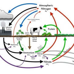 Diagram Of A Tropical Forest 2004 Jeep Grand Cherokee Door Lock Wiring Rainforest Trees Carbon Sequestration Community The Types Vegetation Planted Will Impact Nutrient Quality Soil If Site Has Very Poor Small Weeds Grasses And Plants As Seen In Chart