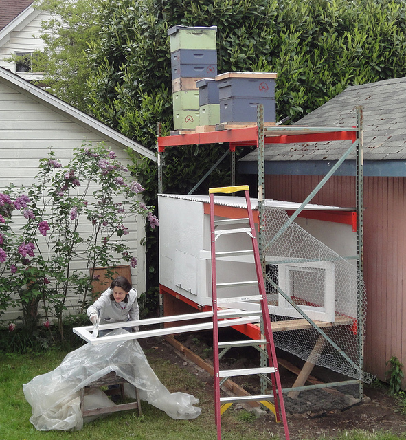 A beekeeper adds hives to the top of the chicken coop.