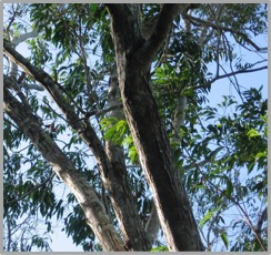 """A Free eBook Offer """"For the Love of Trees"""" Mary Mageau"""