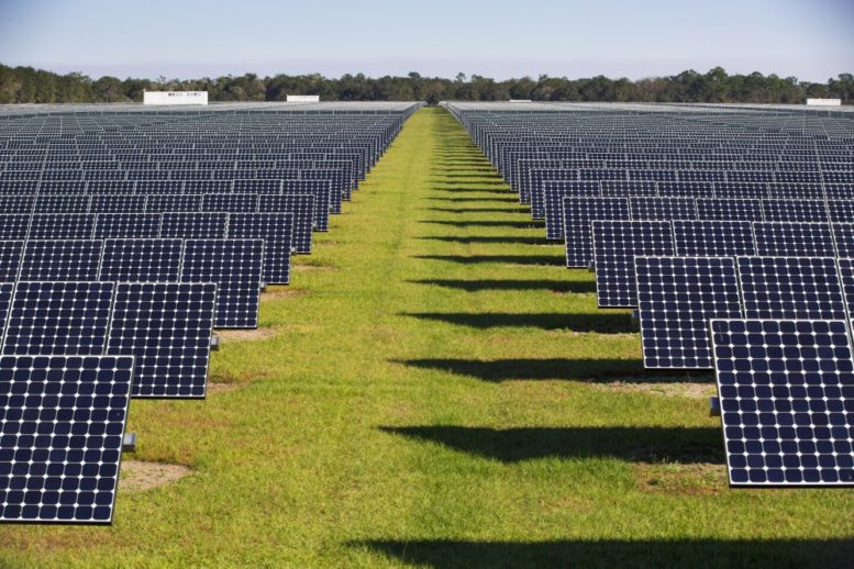 Going Green Takes On A New Meaning In The Sunshine State Miami S Community News