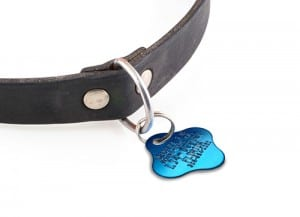 Pet-Tag-and-Vaccine-Price-500