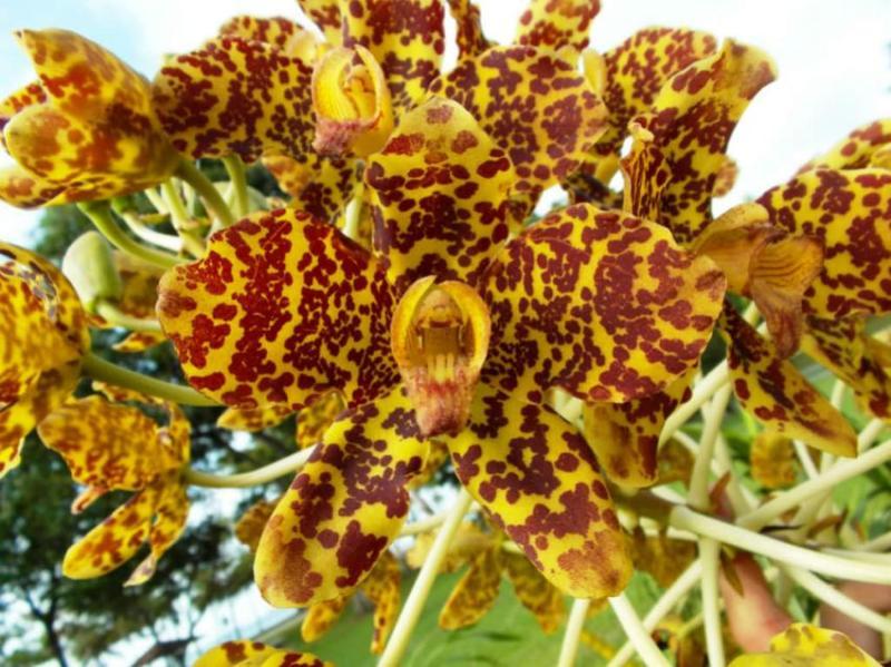 fatos interessantes sobre orquídeas