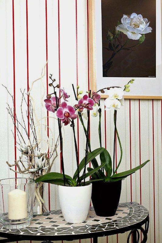decoração de ambientes com orquídeas