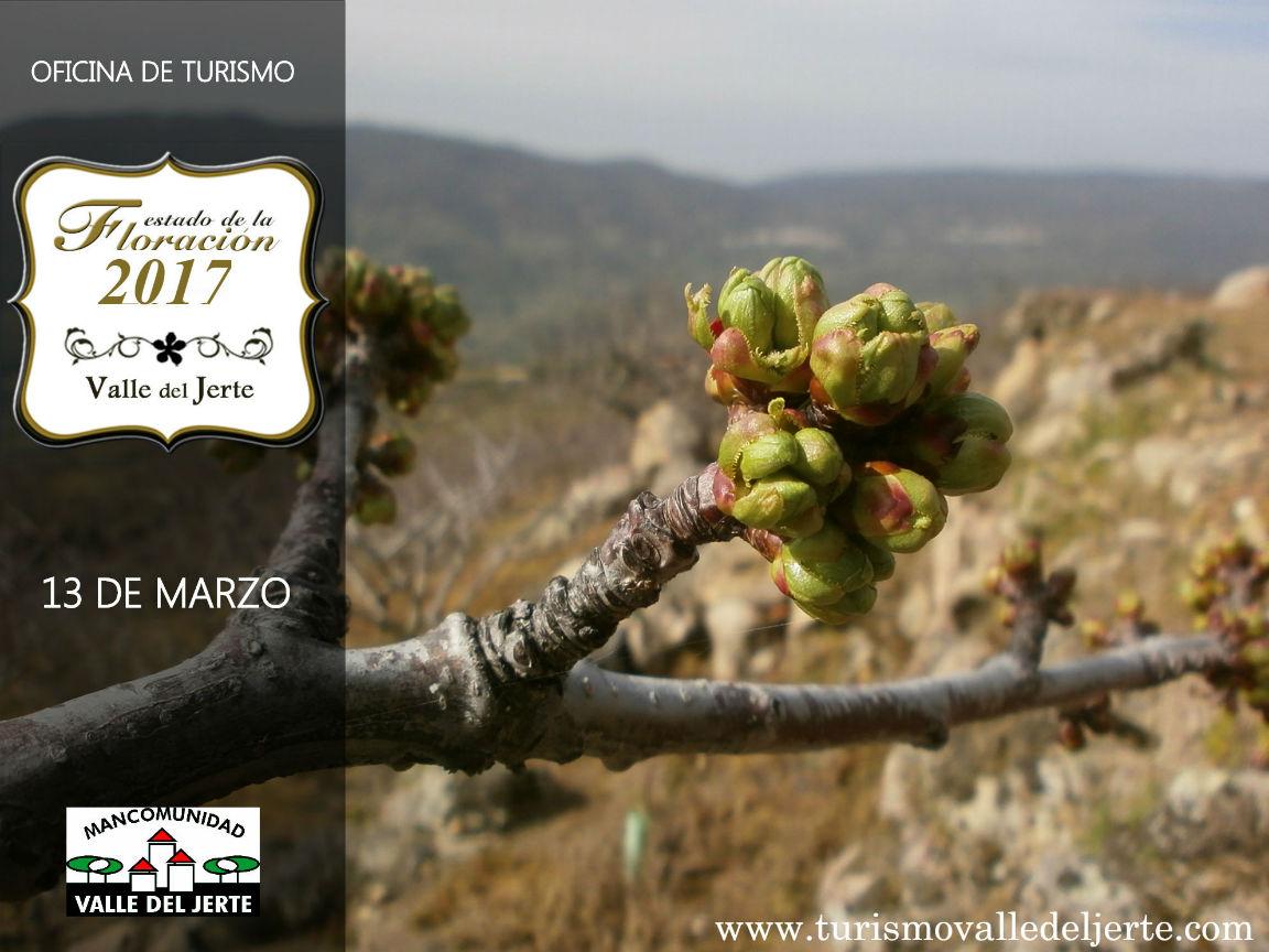 estado floracion valle del jerte 2017