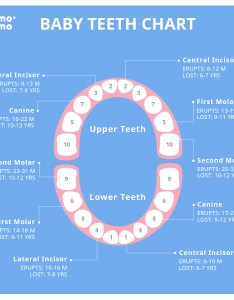Leave  reply cancel also baby teeth chart comotomo rh