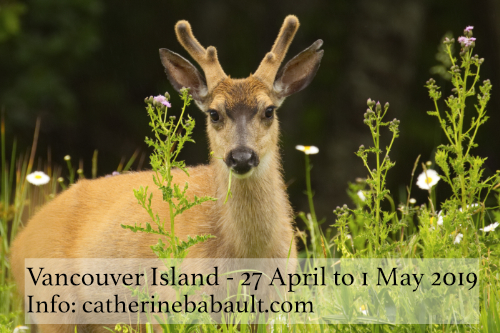 Nature Photography Workshop in the field - Comox Valley