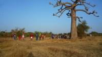 RONDEbranca danse nature baobab