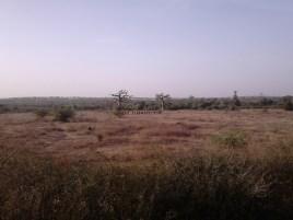 branca danse nature baobab2
