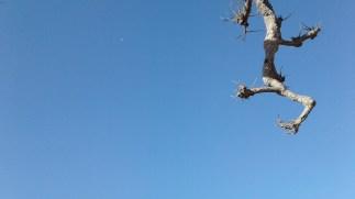 danseur dans le ciel baobab
