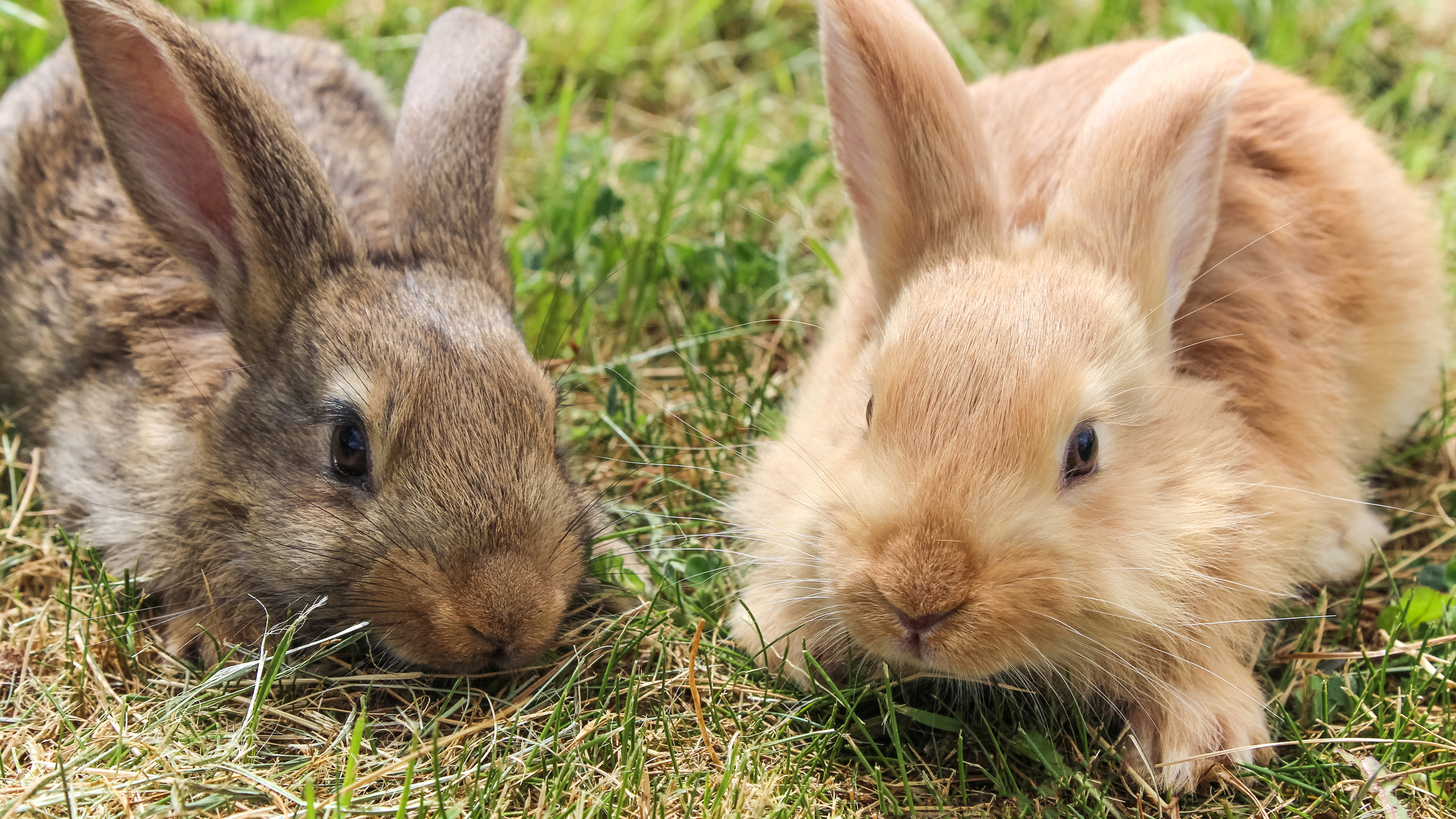 Worms And Your Rabbit Companion Care