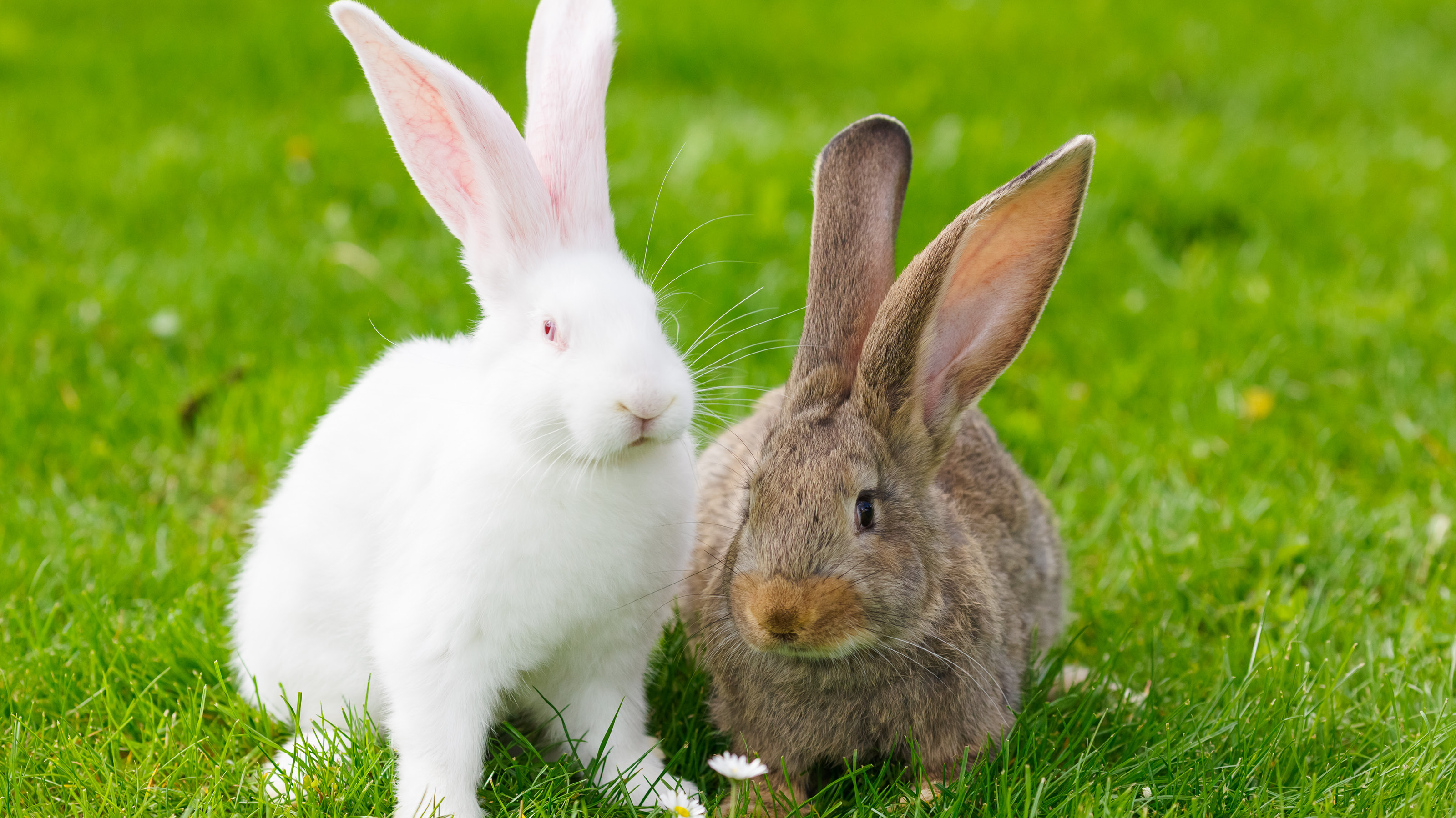 Spring Dangers For Rabbits Companion Care