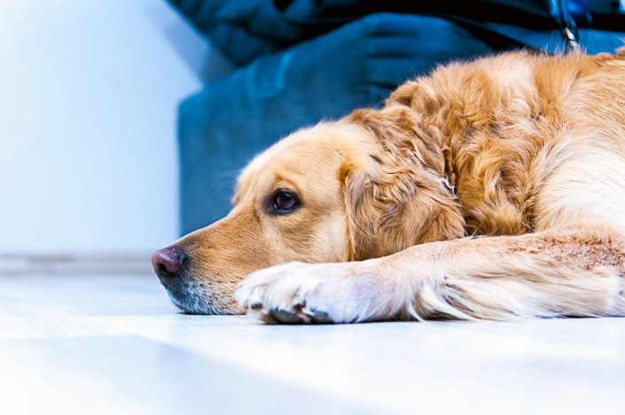 mental health affects one third of pets