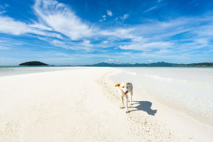 Pet friendly summer holidays