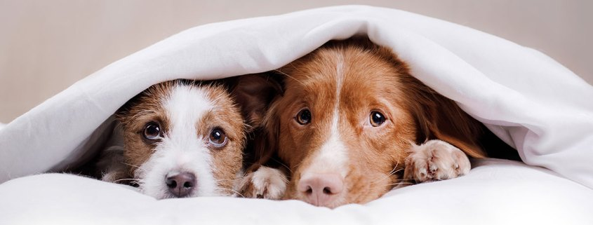 stress and anxiety in pets