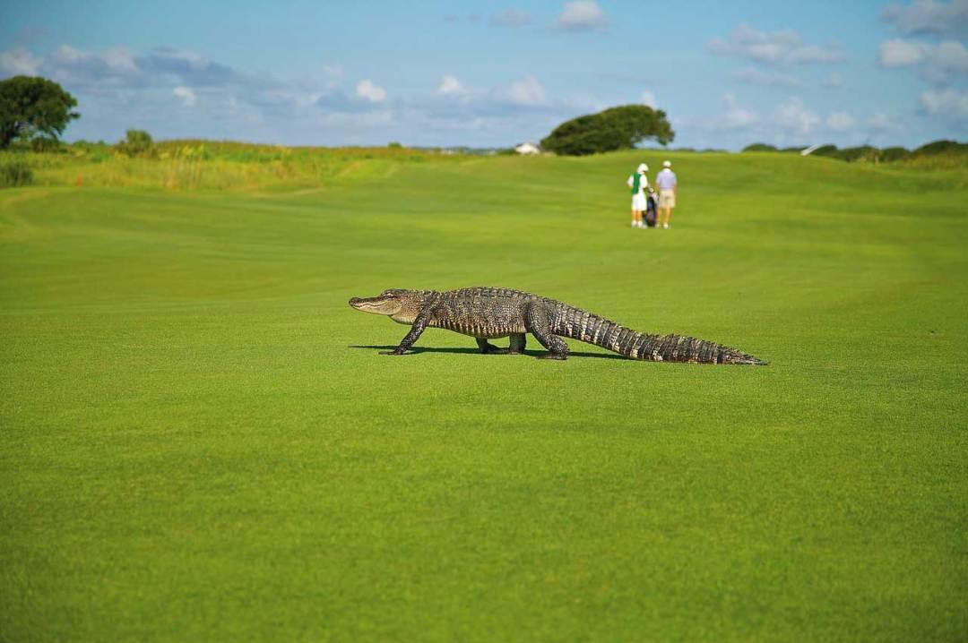 7a91424267563 ▷▷🥇Palos de Golf - El Consumidor.Org