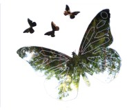 butterfly beds reviews