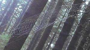 web 01