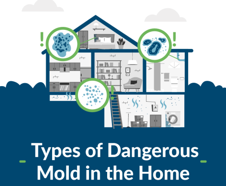 Types of Dangerous Mold in the Home
