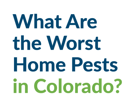 What Are the Worst Home Pests in Colorado?