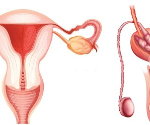 Causes of Vaginal Discharge and Effective Natural Cure