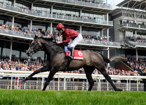 Ascot Next For Victorious Roaring Lion