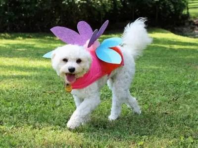 Pet Costumes Ideas