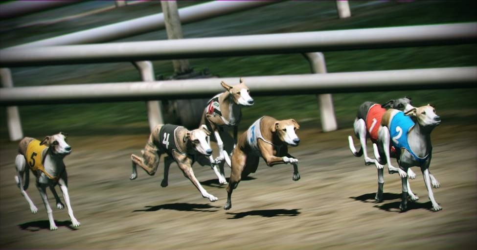 Greyhound racing betting games for super