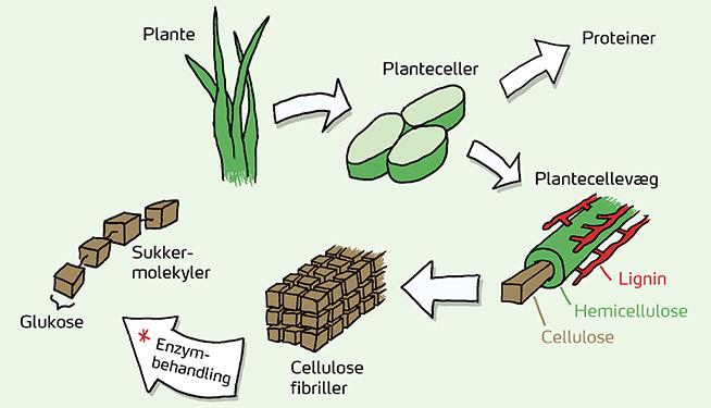 Bioøkonomi 2