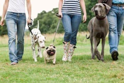 Promenade canine à Bordeaux
