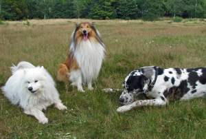 cours d'éducation canine gironde