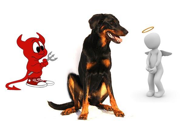 Memoire du chien par renforcement