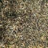 Materiales para compostar: hojas de olivo