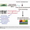 Actividad biológica y bioestimulante de las sustancias húmicas en las plantas