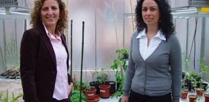 Valorización del alpeorujo por hongos para la obtención de un fertilizante orgánico: premio Medio Ambiente de la Fundación Caja Rural (2010)
