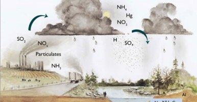 La lluvia ácida y el ciclo del nitrógeno en Bosques: El papel del Calcio