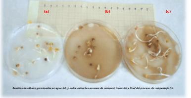 Índice de Germinación de Zucconi, la prueba más usada para saber la madurez de un compost