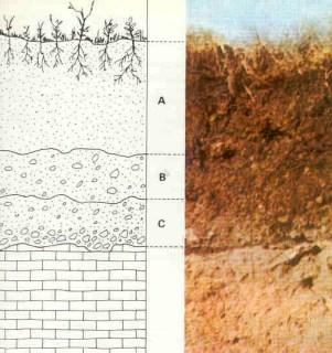 Estructura de un suelo