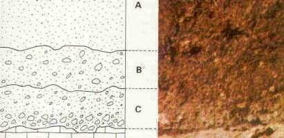 El estudio de la salud del suelo: un reto para químicos y microbiólogos