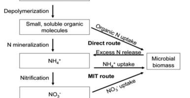 Asimilación del nitrógeno por los microorganismos del suelo
