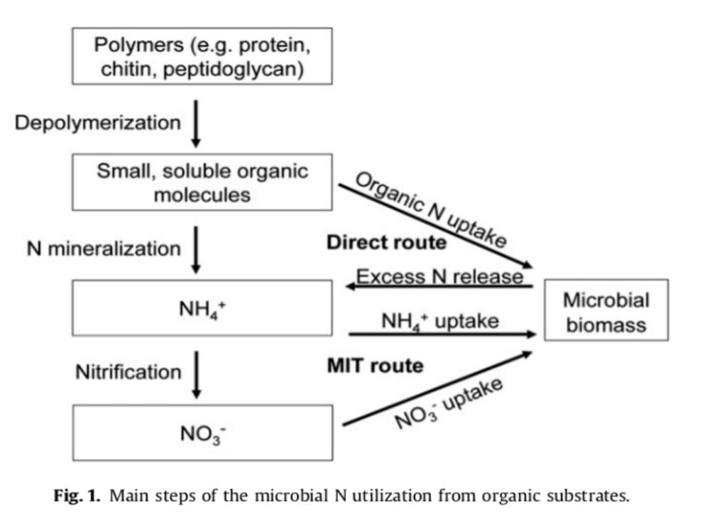 Nitrogeno-y-microorganismos-del-suelo1