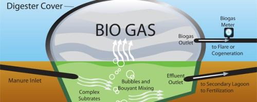 """Oferta de trabajo: """"Optimización de la producción de biogás a partir de estiércol y lodos de depuradora"""""""