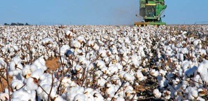 Material para compostar: Residuos de algodón
