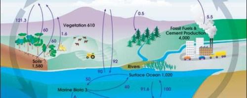 El compost incrementa el secuestro de carbono a medio y largo plazo